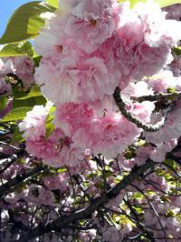 桜散歩道★海と桜の絵小皿 - 月夜飛行船2