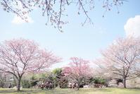 Happy*フォトレッスン・桜編 - happy *riko* PHOTO COLLECTION