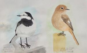 #ネイチャー・スケッチ #Naturejournal #sketch #Watercolor #水彩画 #野鳥 -