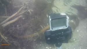 0412  城南島4月11日 - スガジロウのダイビング 「どこまでも潜る 」