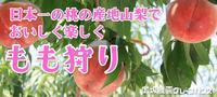 今年も果実狩りは御坂農園グレープハウスがおすすめです。 - Hotel Naito ブログ 「いいじゃん♪ 山梨」