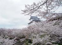 津山城界隈で美味しいもの散策 - つれづれ日記Ⅱ