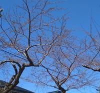レタスの植え替え作業 - sola og planta ハーブを育てながら