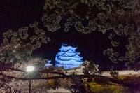 姫路城の夜桜ライトアップ - マクロフォトトラベラー by PlumCrazy