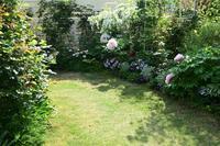 今年2021年の牡丹③今が庭の主役の牡丹とバラの蕾 - バラとハーブのある暮らし Salon de Roses