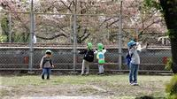 藤田八束の鉄道写真@夙川公園の桜が満開子供たちの歓声で貨物列車が走る - 藤田八束の日記