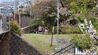 藤田八束の鉄道写真@桜が散り始めました、桜と貨物列車のある公園さくら夙川駅から徒歩10分夙川公園は素敵です。 - 藤田八束の日記