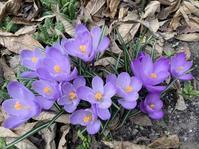 春のお花を眺めて4月後半も走る♪ - きがみ ピアノ教室