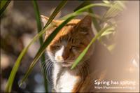 春は眠くなる - すずちゃんのカメラ!かめら!camera!
