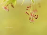 楓の春 - 瞳の記憶