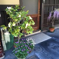 『京都の春・・いつもの近所の玄関前・・』 - NabeQuest(nabe探求)