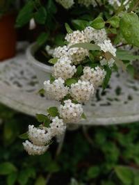 庭の花など - hanasdiary.exblog.jp
