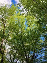 いよいよ新緑の季節 - LUZ e SOMBRA