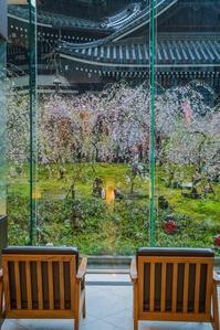 スターバックスコーヒー京都烏丸六角店~六角堂と桜を眺めながら - 十人十色
