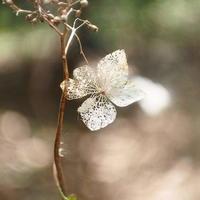 耐える - さぬき風花