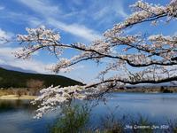 ◆ 昨年「田貫湖」再び(2021年4月) - 空とグルメと温泉と