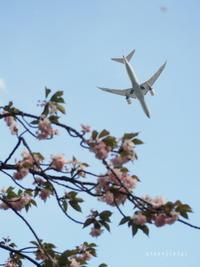 目黒川の珍客 - Green Floral