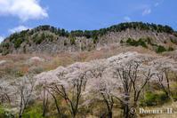 屏風岩の春 - one day, one photo