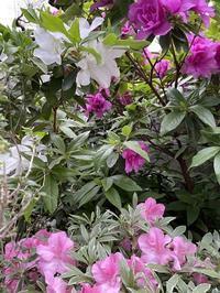 庭に咲く花 - ももちゃん大好き♪