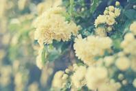 bloom - IL EST TROP TARD 時は過ぎゆく ... 2