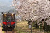 2021年山陰線大岩駅の桜並木 - ローカル無人駅