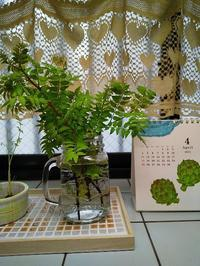 木の芽味噌作ってみました - 十色生活