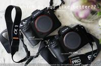 メインにsony α1、サブ機にsony α7RIV てテがあったね。  #a1 #aRIV #カメラ #写真 - さいとうおりのお気に入りはカメラで。
