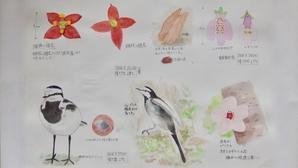 #ネイチャー・スケッチ #Naturejournal #sketch #Watercolor #水彩画 #野鳥 #植物 -
