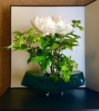 牡丹 - 東京いけばな日記 花と暮らしと生活と