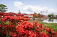 「京都西山の花の赤壁-長岡天満宮-」 - ほぼ京都人の密やかな眺め Excite Blog版