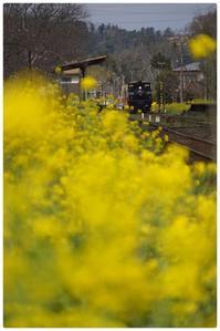 小湊鐵道・いすみ鉄道(3月22日) - とまれみよⅡ