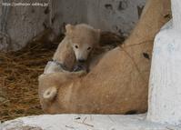2021年3月天王寺動物園その5 - ハープの徒然草