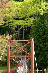 新緑へ向かう吊り橋 - one day, one photo