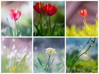 spring#21 - The collection of photograph