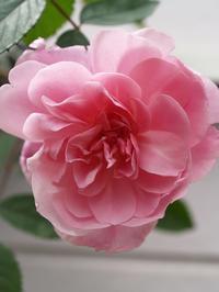 花の季節 - hibariの巣