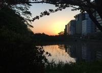 水面の夕陽 - 設計通信2 / 気になるカメラ、気まぐれカメラ