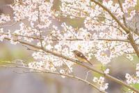 # また秋にね、ジョウビタキ - TORI たどり (小鳥、わんこ、写真 ♥)