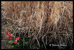 脇に咲く - Photo.Color
