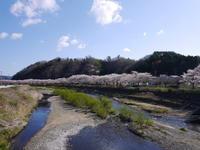 北国の桜 - マスター写真館2