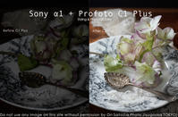 sony α1+ Profoto 一瞬エラーのち成功の作例#sonya1 #a1 #Profoto #A1x #C1Plus - さいとうおりのお気に入りはカメラで。