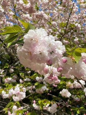 春は、必ずやってくる - ポルトガル便り~ヨーロッパ偏見(ひんがら)日記2