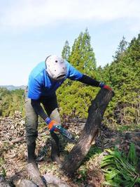原木しいたけコマ打ち作業(2021)多くの手間ひまで育てられる最も自然に近い栽培方法です(後編)! - FLCパートナーズストア