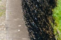 21散歩〜春ハクセキレイ鳥撮りさんぽDAY19 - 散歩と写真 Fotografia é Passeggiata