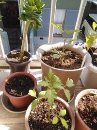 種まきや苗の植え付けを始めてます。 - Emptynest