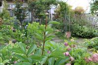 庭の花 - 絵と庭
