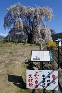 長野そぞろ歩き・高山:花見・枝垂れ桜巡り(2) - 日本庭園的生活