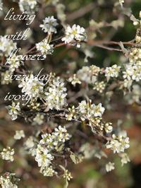 オープン -  Flower and cafe 花空間 ivory (アイボリー)