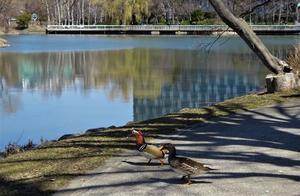 中島公園の鳥たち - 中島公園花だより