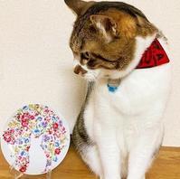 シルエット ポーセリン - Noriko。の気まぐれ Diary       綺麗・可愛い・楽しい・幸せ!日記