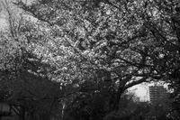 春の公園で20210416 - Yoshi-A の写真の楽しみ